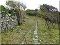 SZ5379 : Bridleway on Appuldurcombe Down by Robin Webster