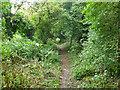 SZ5379 : Bridleway up Appuldurcombe Down by Robin Webster