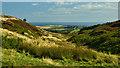 NZ7613 : Birk Dale by Mick Garratt