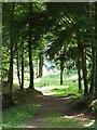 NX8499 : Woodland walk, Drumlanrig Woods by Philip Halling