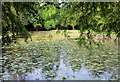 SD6627 : The Lily Pond in Witton Country Park by Chris Heaton