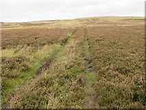 NT7153 : Another trackline heading for Hen Hill above Kettleshiel in the Scottish Borders by ian shiell