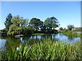SK7499 : The village pond at Westwoodside by Marathon