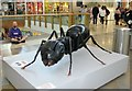 TG2208 : Big Bugs on tour - black ant by Evelyn Simak