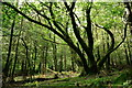 NY1404 : Woodland in Wasdale by Peter Trimming