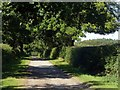 SK5452 : Newstead Abbey, south drive by Alan Murray-Rust