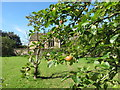 ST9168 : St Cyriac's church, Lacock, from apple orchard by David Hawgood