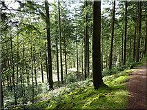 SN7673 : Path in Hafod woodland by John Lucas