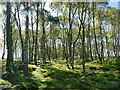 SK2773 : Birch woodland on Gardom's Edge by Graham Hogg