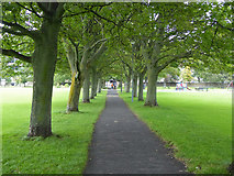 NT2572 : Tree lined path, The Meadows, Edinburgh by Robin Webster