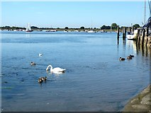 SU8003 : A corner of Bosham Harbour by Oliver Dixon