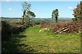SX6054 : Field and felled trees, Coyton by Derek Harper