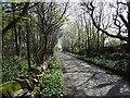 NX5849 : Road, Knockbrex by Richard Webb