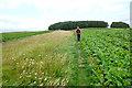 SO2867 : Approaching Hawthorn Hill along the Offa's Dyke Path by Jeff Buck