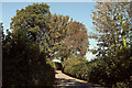 SX7359 : Lane to Wonton Cross by Derek Harper