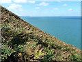 SN0542 : Above the rocks of Trwyn y Bwa by Richard Law