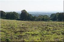 SK0512 : Field above Gentleshaw by Bill Boaden
