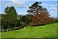 SD3695 : Looking towards Hawkshead from Near Sawrey by David Martin
