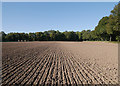 NH6755 : Ploughed field, Rosehaugh by Craig Wallace