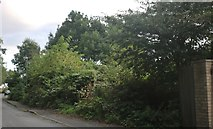 TL2460 : Woodland by Abbotsley Road, Croxton by David Howard