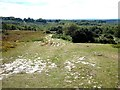 TQ4627 : A corner of Ashdown Forest by Oliver Dixon