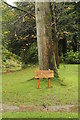 SC2984 : Tree planted by Amy Johnson, aviator by Richard Hoare