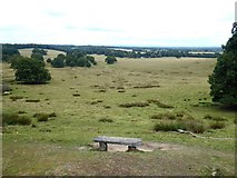 SU9622 : View across Petworth Park by Oliver Dixon