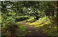 SX7389 : Path on Piddledown Common by Derek Harper