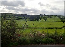 H9618 : Grazing cattle in the Cully Water Valley north of Silverbridge by Eric Jones