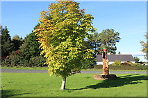 NX9575 : Colour at Garden Wise, Dumfries by Billy McCrorie