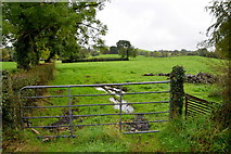 H5956 : Gate, Ballynasaggart by Kenneth  Allen