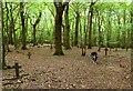 TQ5708 : Highlands Wood by Simon Carey