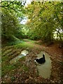 TQ5608 : Path, Wilmington Wood by Simon Carey