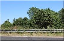 SP8940 : Woodlands by Childs Way, Milton Keynes by David Howard