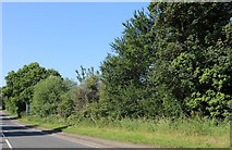SP9063 : Woods by the A509, Wollaston by David Howard
