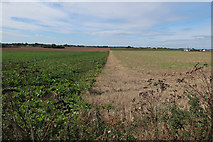 TG3930 : Crop boundary  by Hugh Venables