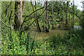 TL9591 : Wet woodland in Lammas Covert by Hugh Venables
