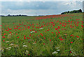SK9218 : Poppies on the Lincolnshire/Rutland county boundary by Mat Fascione