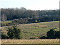TQ4661 : Pastures south of Pratt's Bottom by Robin Webster