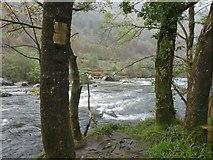 SH5946 : Looking across the Afon Glaslyn by Gerald England
