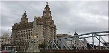 SJ3390 : Royal Liver Building, Liverpool by Christine Matthews