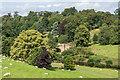 NU1813 : Parkland, Alnwick Castle by Ian Capper