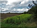 SK7376 : Countryside by Wood Lane - north of Askham by Neil Theasby