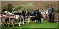 NY1808 : Wasdale Show 2019 by Peter Trimming
