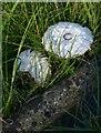 SU5494 : Churchyard fungi by Stefan Czapski
