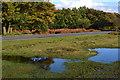 SU2515 : Roadside puddles at Longcross by David Martin