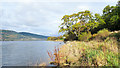 NN1107 : Vegetation along shore of Loch Fyne by Trevor Littlewood