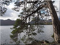 NY2622 : A Tree at Friar's Crag Keswick by Jennifer Petrie