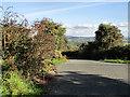 S7137 : Roadside Fuchsia by kevin higgins