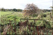 NT5570 : Sandyford Drain by Anne Burgess